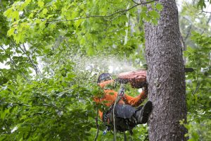 Tree Removal Service In Leander